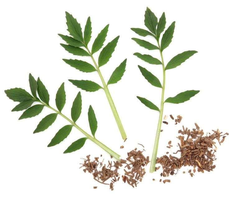 Naturally Botanicals-Valerian Root - Valeriana officinalis 1