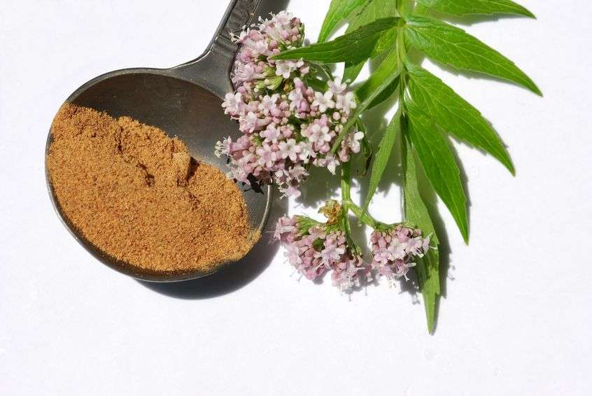 Naturally Botanicals-Valerian Root - Valeriana officinalis 2